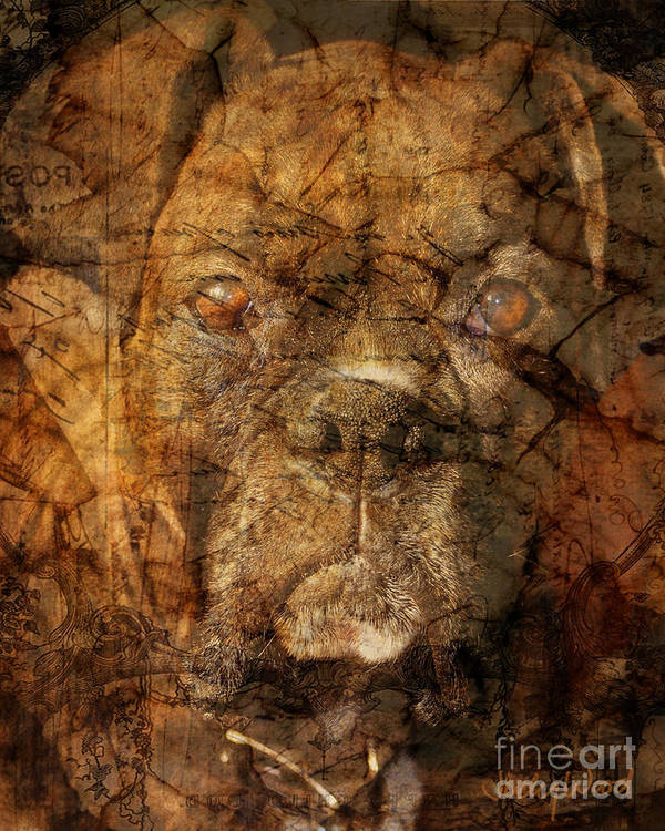 Dog Art Print featuring the digital art Look Into My Eyes by Judy Wood