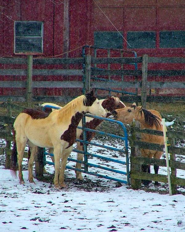 Horses Art Print featuring the photograph Meeting Of The Equine Minds by Julie Dant