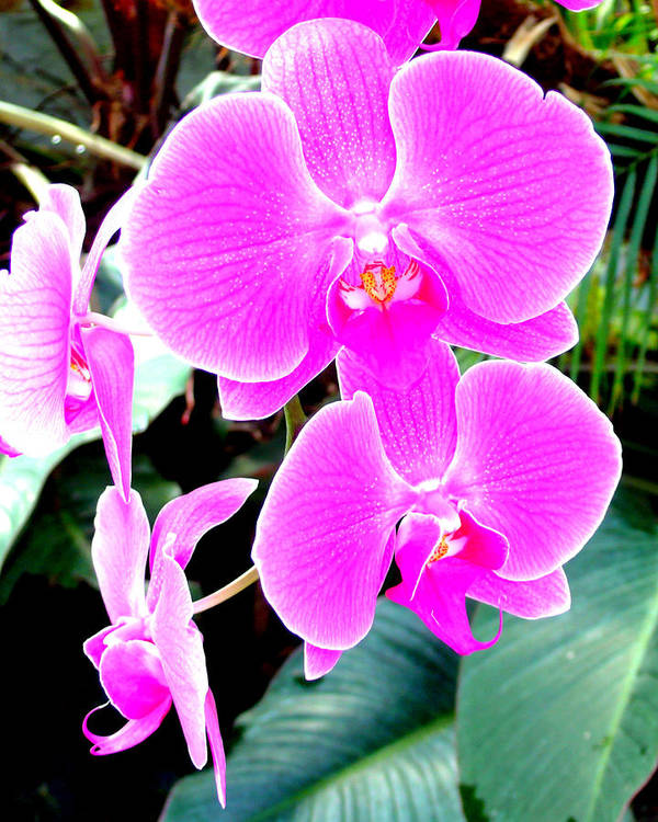 Orchid Art Print featuring the photograph Orchid Series 1 by Katy Hawk
