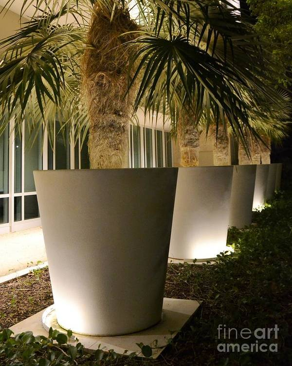 Palms In Pots Art Print featuring the photograph Palms In Pots by Darla Wood
