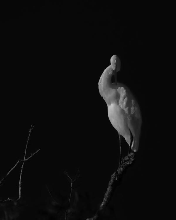 Black And White Art Print featuring the photograph shy by Mario Celzner