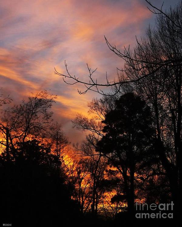 Sunset Art Print featuring the photograph Sunset View From The Path by Lizi Beard-Ward
