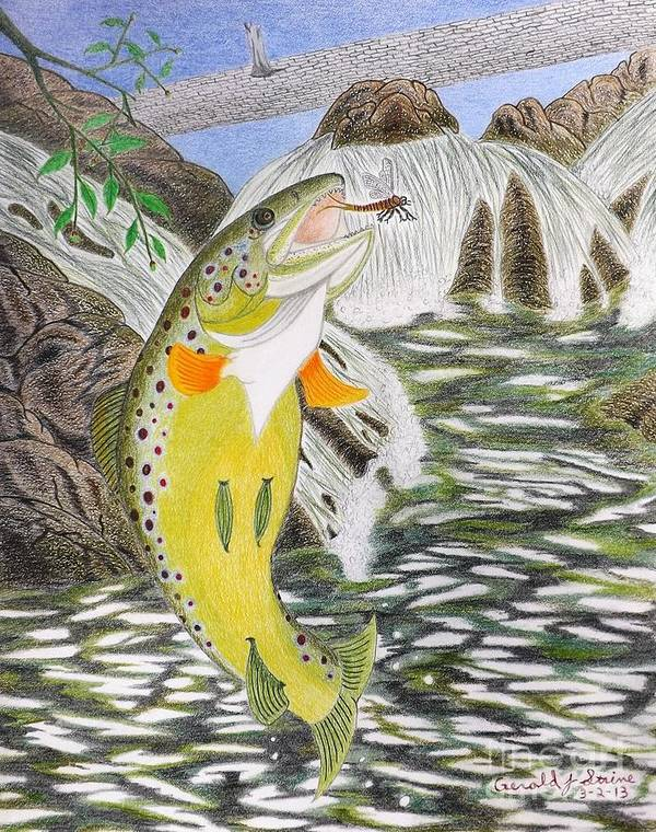 Trout Stream Art Print featuring the drawing Trout Stream In May by Gerald Strine