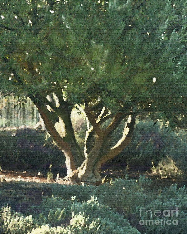 Corde Valle San Martin Ca Print featuring the painting Vineyard Olive by Artist and Photographer Laura Wrede