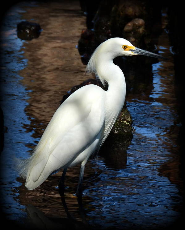 Heron Art Print featuring the photograph White Beauty by Carla Parris