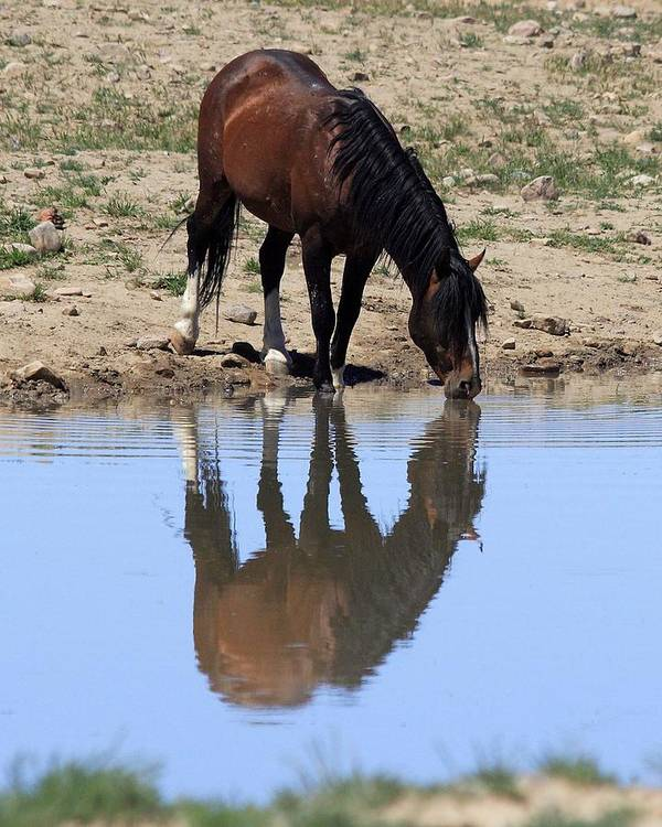 Wild Art Print featuring the photograph Wild Reflection by Gene Praag