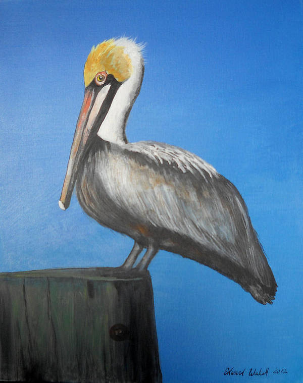 Pelican Art Print featuring the painting Brown Pelican by Edward Walsh