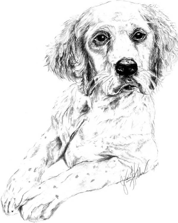 Dog Nature Wildlife Nature Birddog Art Print featuring the drawing Bird Dog by Janis Hobbs