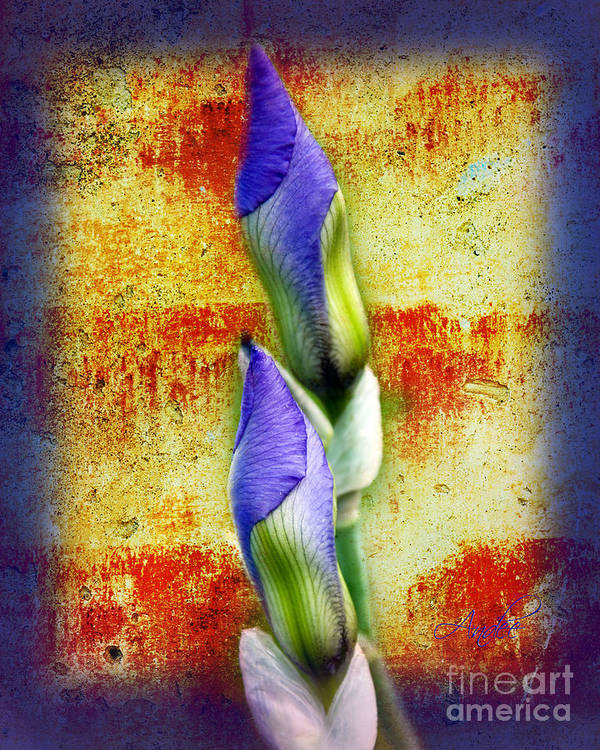 Purple. Iris. Buds Art Print featuring the photograph Buddies by Andee Design