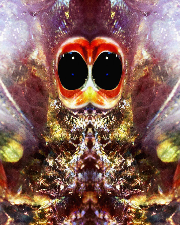 Abstract Art Print featuring the photograph Bug Eyes by Skip Nall