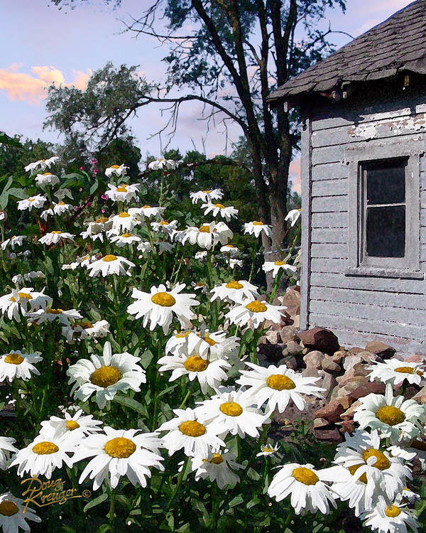 Daisies Art Print featuring the painting Daises Delight II by Doug Kreuger