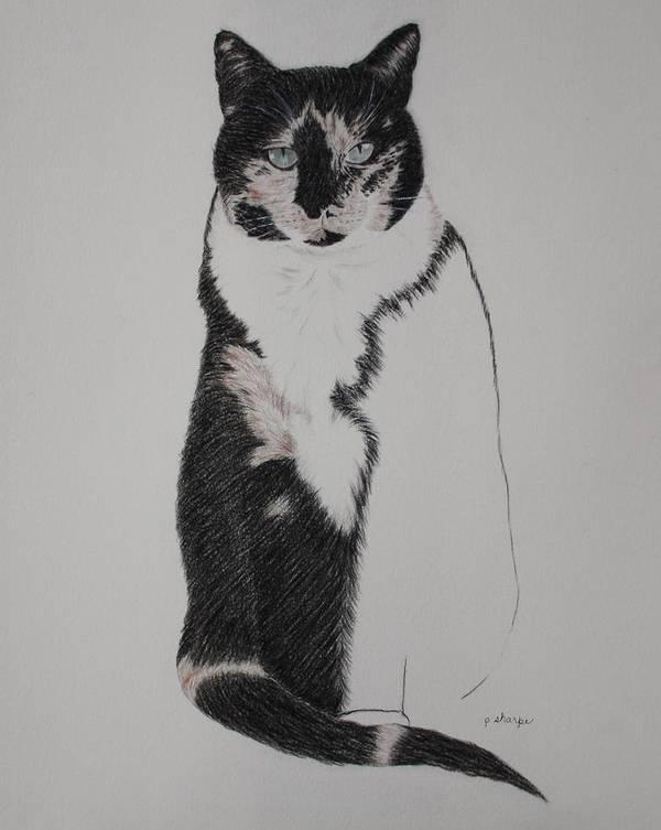 Spirit Cat Essence Art Print featuring the drawing Friend II by Patsy Sharpe