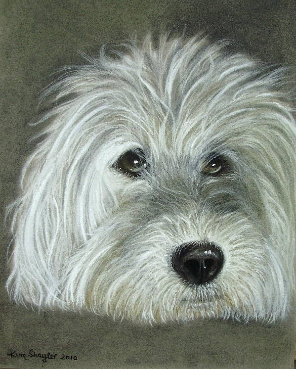 Dog Art Print featuring the painting Harry by Kim Shayler