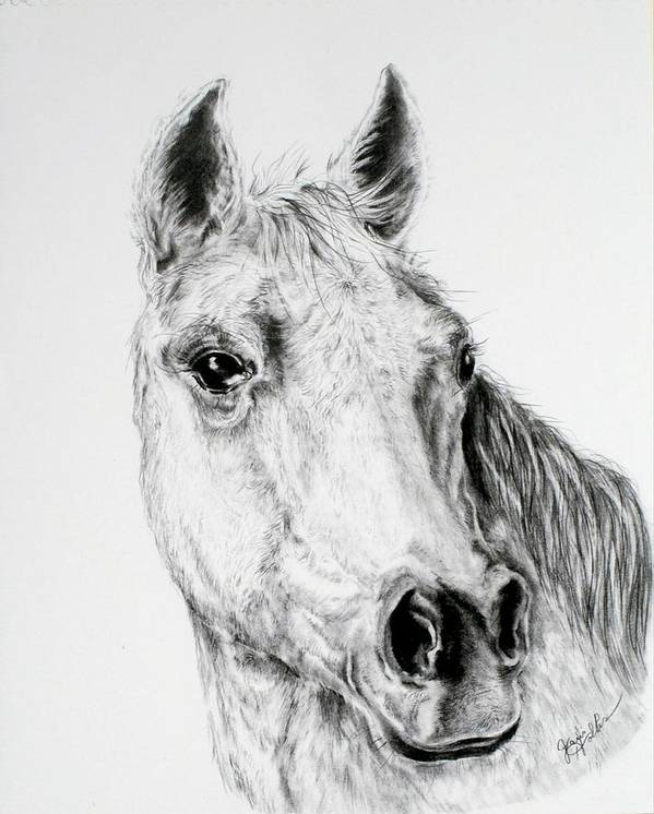 Horse Drawing Art Print featuring the drawing Horse by Janis Hobbs