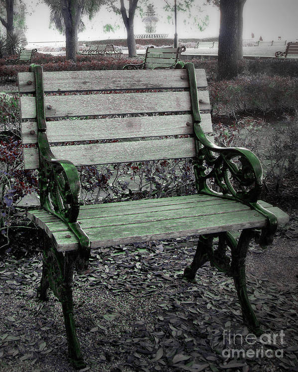 Bench Art Print featuring the photograph Party Of One by Melanie Snipes