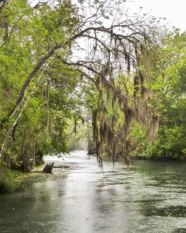 Florida Landscapes Art Print featuring the photograph Silver Springs River In The Rain 2 by Betty Eich