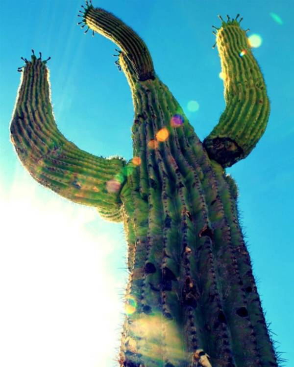 Cactus Art Print featuring the photograph Towering Saguaro by Valerie Shultz