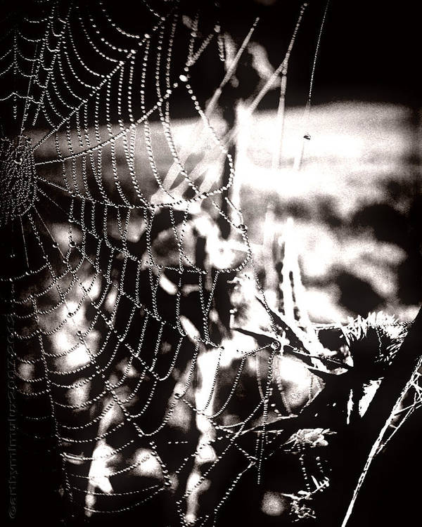 Trap Art Print featuring the photograph Trap - Falle by Mimulux patricia No