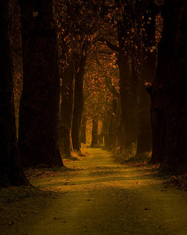 Road Art Print featuring the photograph Way In The Forest by Zafer GUDER