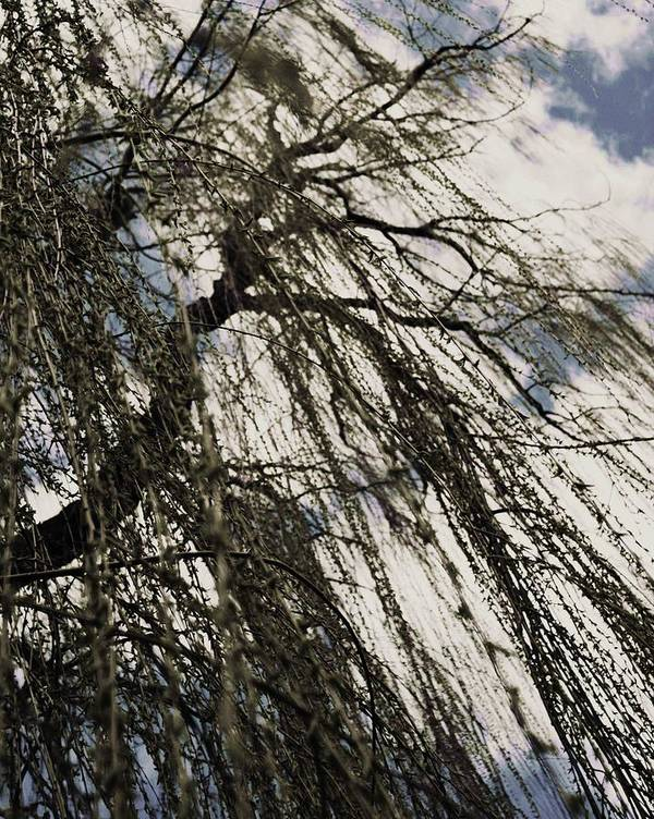 Willow Tree Art Print featuring the photograph Willow Tree by Todd Sherlock