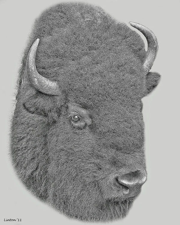 American Bison Print featuring the digital art American Bison by Larry Linton