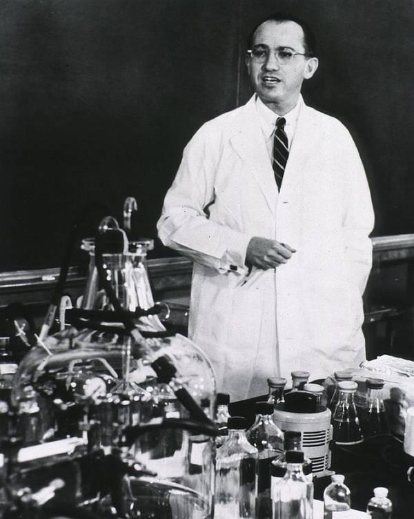 History Art Print featuring the photograph Jonas E. Salk 1914-1995, American by Everett