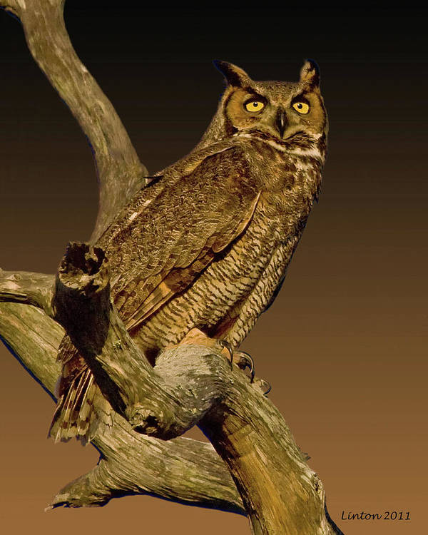 Great Horned Owl Art Print featuring the photograph Great Horned Owl by Larry Linton