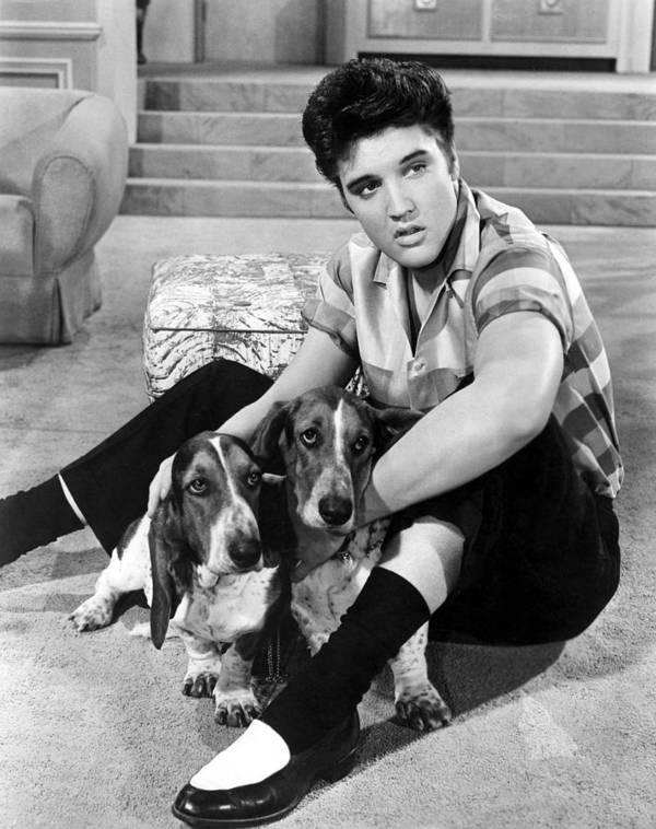 1950s Portraits Print featuring the photograph Jailhouse Rock, Elvis Presley, 1957 by Everett