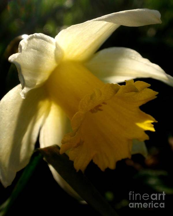 Nature Art Print featuring the photograph Scent Of Spring by Valia Bradshaw