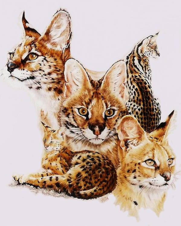Serval Art Print featuring the drawing Adroit by Barbara Keith
