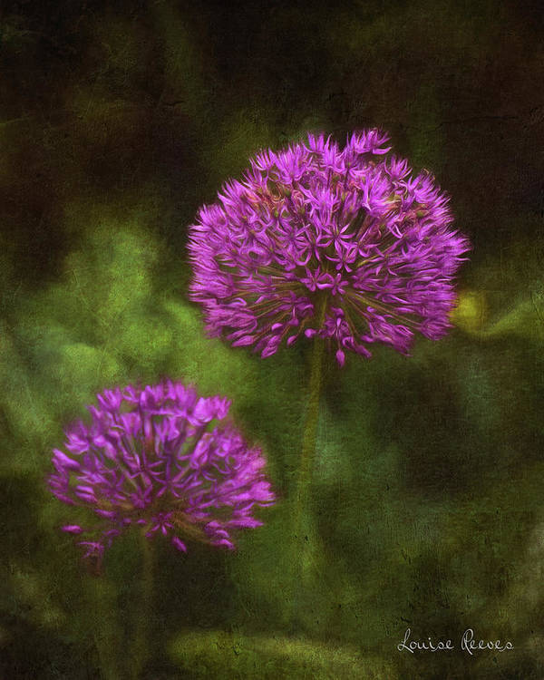 Allium Art Print featuring the photograph Allium by Louise Reeves