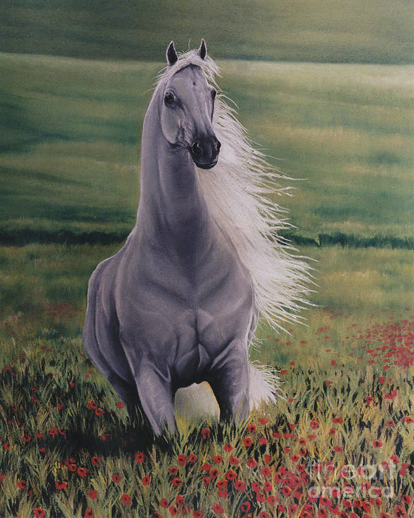 White Horse Art Print featuring the pastel Andalusian Spirit by Louise Green