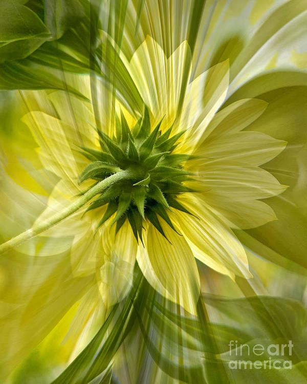 Floral Art Print featuring the photograph Back Petal by Chuck Brittenham