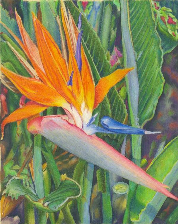 Flower Art Print featuring the painting Bird O Paradise by Robynne Hardison