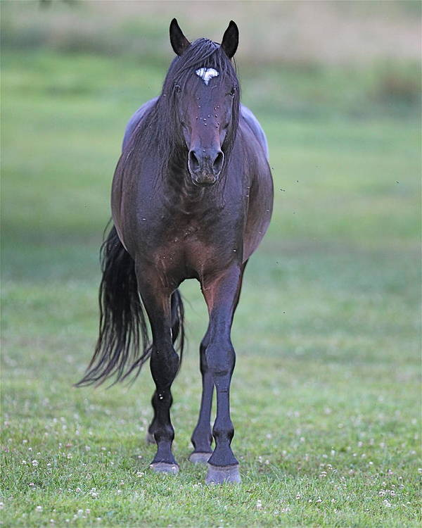Horse Art Print featuring the photograph Black Horse by Glenn Vidal