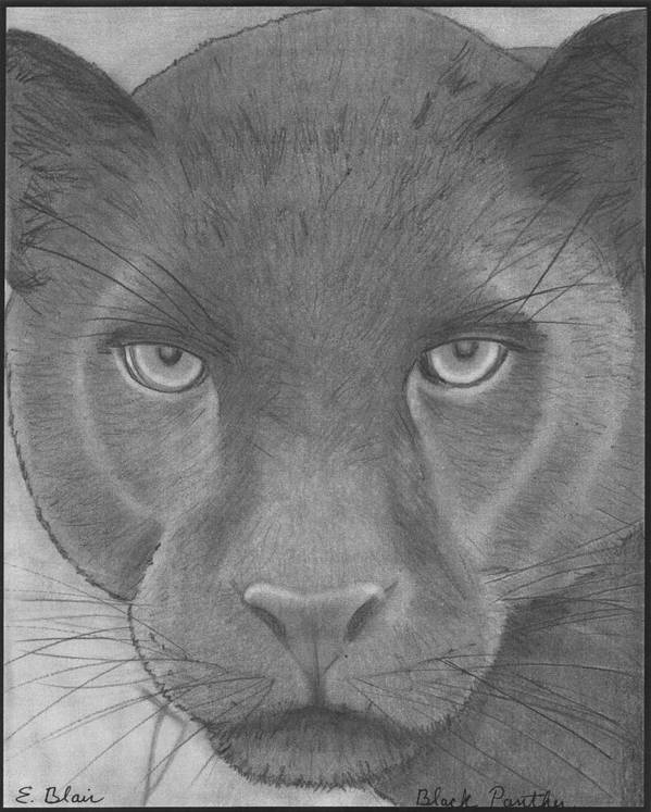 Wildlife Art Print featuring the drawing black Panther by Eileen Blair