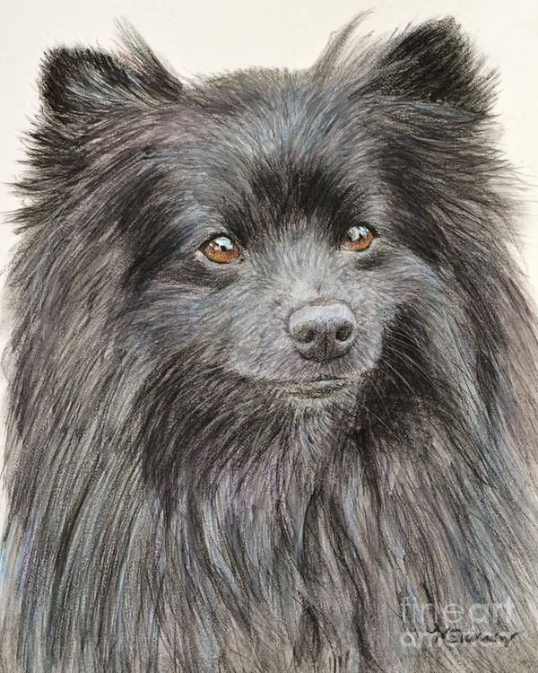 Pomeranian Art Print featuring the painting Black Pomeranian Painting by Kate Sumners