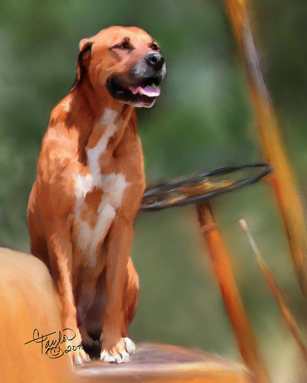 Dog Print featuring the painting Buck by Colleen Taylor