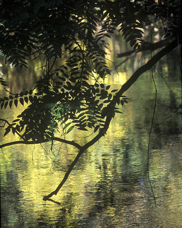 Landscape Art Print featuring the photograph Creekside Color 2 by Charlie Osborn