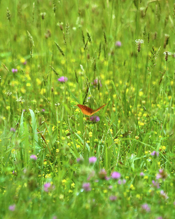 Butterfly Art Print featuring the photograph Dancing Among The Flowers by Southern Arts