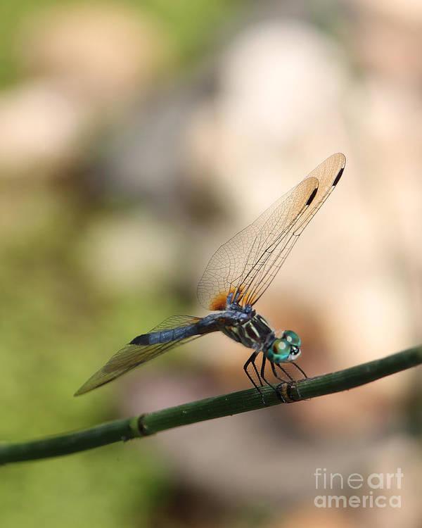 Art Art Print featuring the photograph Dragonfly Ref.13 by Robert Sander