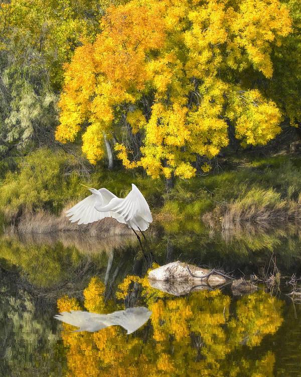 Bird Art Print featuring the photograph Fall Reflections by Chuck Brittenham