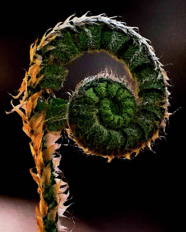 Fern Art Print featuring the photograph Fiddlehead by Nathan Thomas