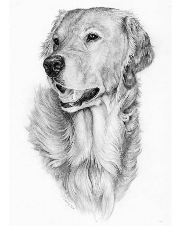 Dog Art Print featuring the drawing Ginger by Laurie McGinley
