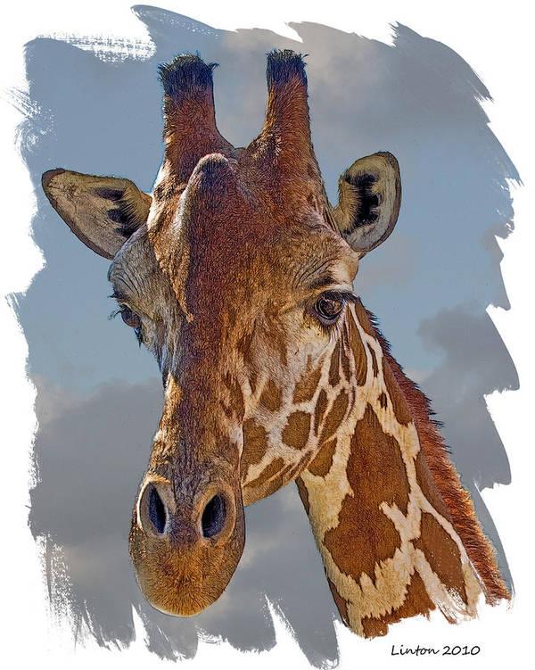 Reticulated Giraffe Art Print featuring the digital art Giraffe by Larry Linton