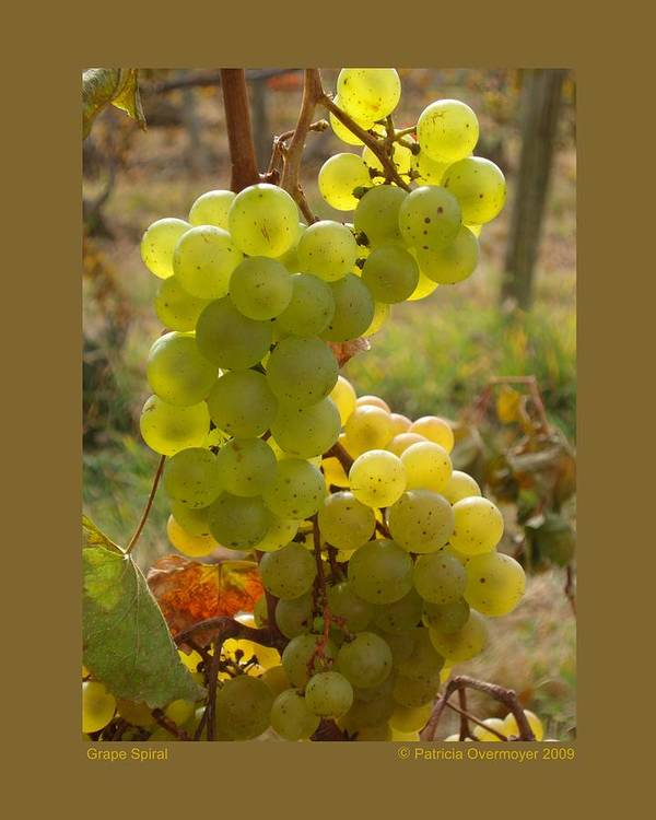 Grapes Art Print featuring the photograph Grape Spiral by Patricia Overmoyer