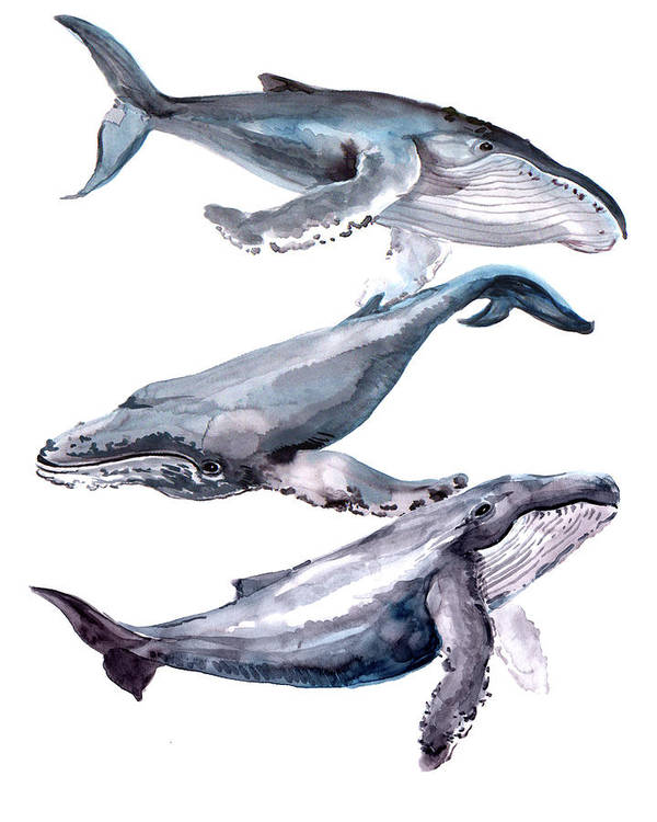 Humpback Whale Art Print featuring the painting Humpback Whales by Suren Nersisyan
