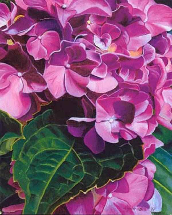 Pink Hydrangea Painting Art Print featuring the painting Hyrangea by Joyce Hutchinson