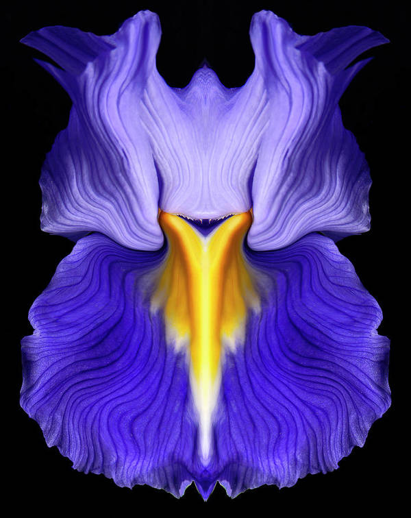 Flower Art Print featuring the photograph Iris by Gary Zuercher