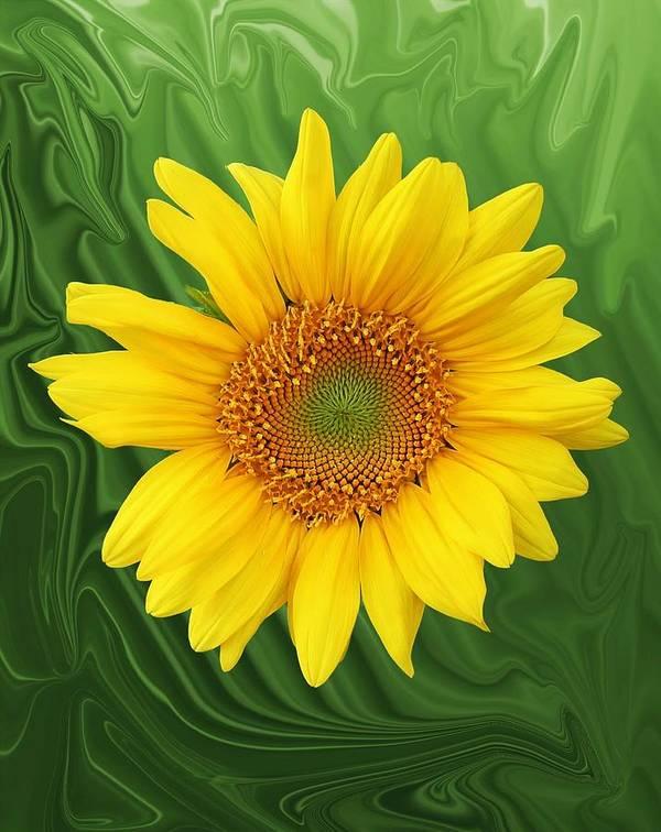 Sunflower Art Print featuring the photograph Kansas Sunflower by Jim Darnall